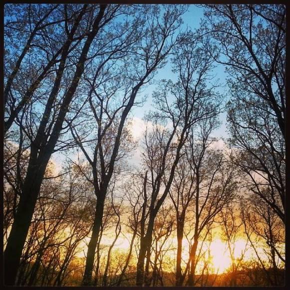 beauty-trees