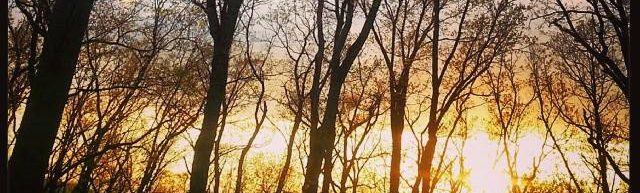 cropped-beauty-trees.jpg