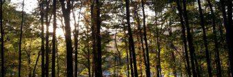 cropped-summer-trees.jpg