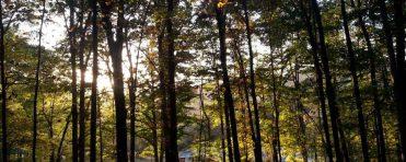cropped-summer-trees2.jpg