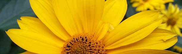 cropped-yellow-flower.jpg